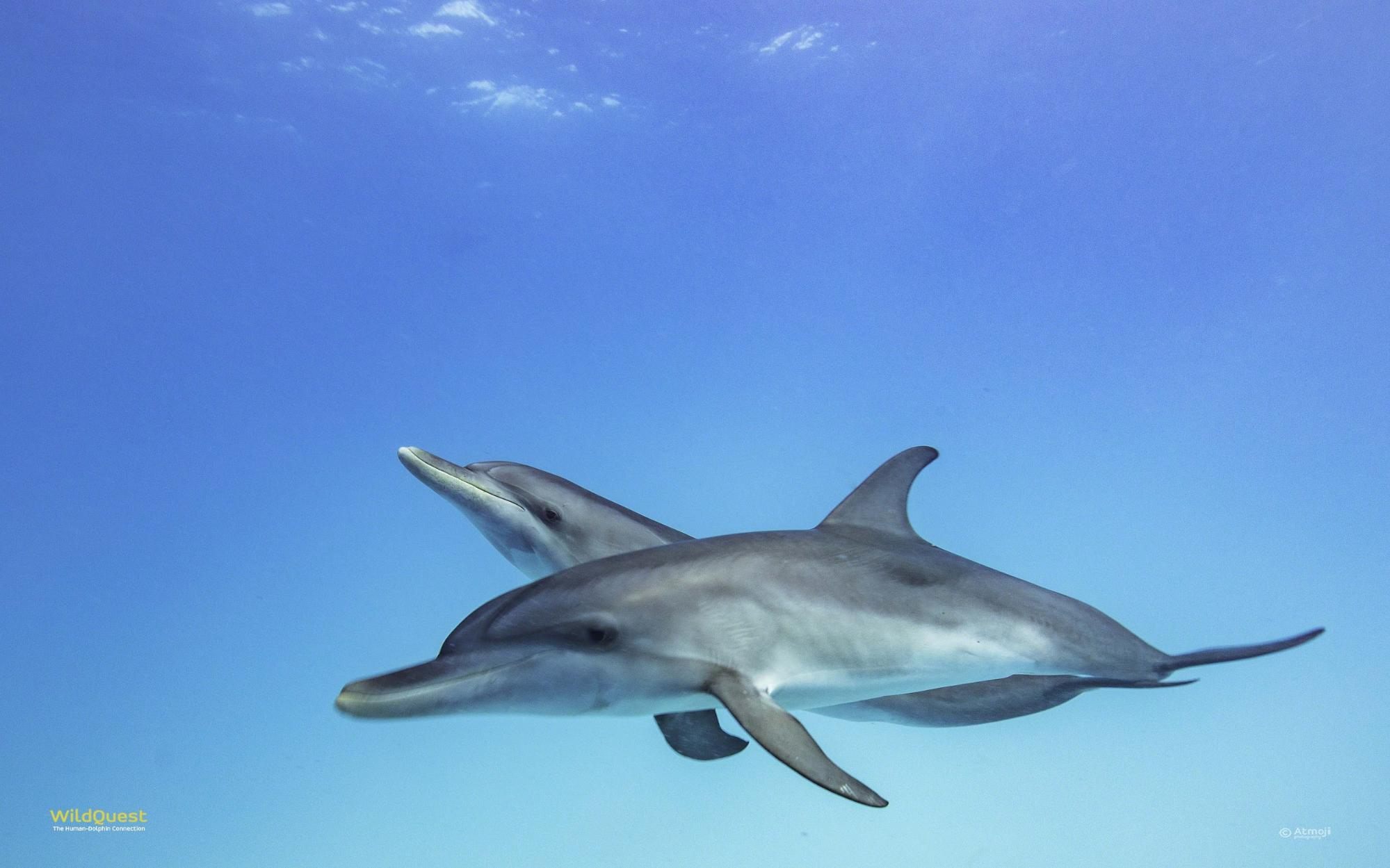 Image credit: Atmoji at Wild Quest, where I learned how to care for my human pod as well as the beauty of wild dolphins.